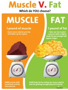 Muscle vs Fat Poster