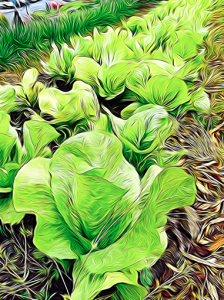 Lettuce Painting
