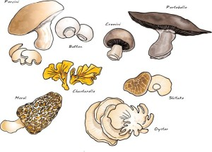 Do you know your mushrooms?